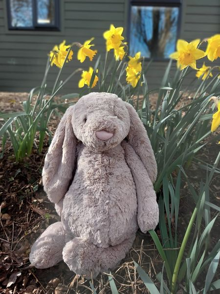 Win our Easter Bunny